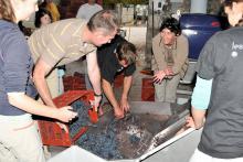 Journée vendange coffret parrainage de pied de vigne en Touraine