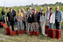 Equipe vendange parrain des pieds de vigne en Touraine