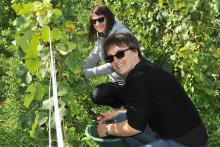 coffret cadeau visite et vendange chez un vigneron