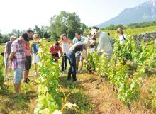 Visite au Domaine pour une découverte viticole