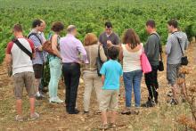 coffret location vigne cote du rhone
