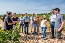 visite pédagogique du vignoble
