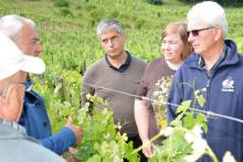 visite découverte du vignoble bordelais