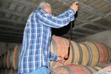 Visite de cave et vignoble dans le bordelais