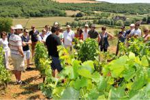 visite de vignoble coffret cadeau
