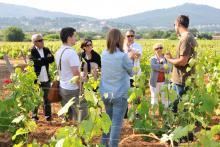 Vivre une expérience de vigneron location et parrainage de vigne