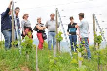 visite découverte du vignoble d'Alsace
