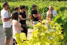 Visite Découverte coffret location pied de vigne Côtes du Rhône