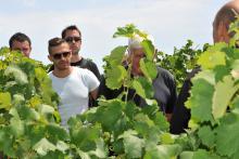 découvrir le vignoble de la vallée du rhone en parrainant vigne